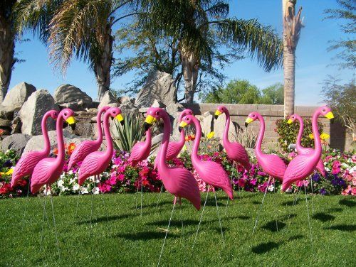 50 Pink Flamingo Lawn Ornaments by 50 Pre. $179.95. The best looking and longest lasting pink flamingo sold. Manufactured from durable outdoor plastic in the USA. 24 inch galvanized steel legs included. Premium Pink Flamingos stand approx 34 inches tall. Hand painted with bright, glossy all-weather paint on beaks and eyes,. 50 Premium Pink Flamingo Lawn Ornaments. Ideal for a Pink Flamingo Fundraiser or just to celebrate that special event. Standing approx 34 inches tall ...
