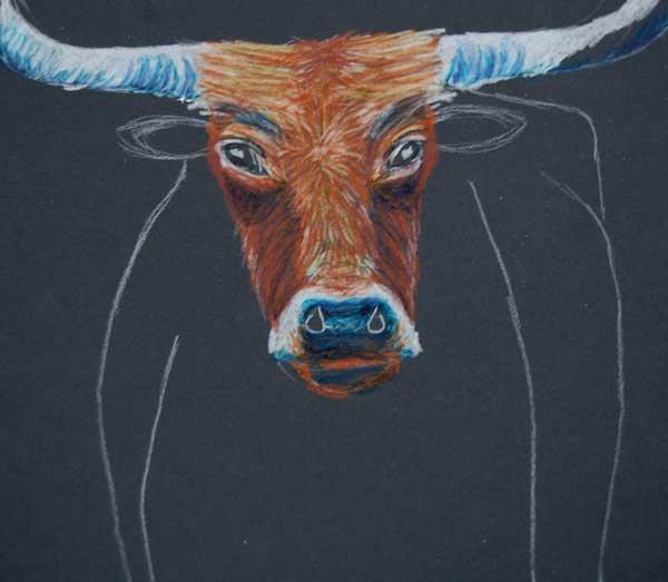 Oct 31 How To Draw A Texas Longhorn Texas Longhorns How
