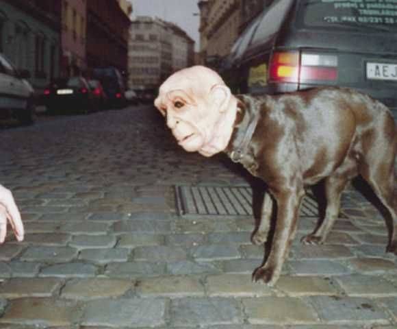 10 Weird, Funny and Just Plain Weird Halloween Costumes - Neatorama --   This one is INVASION OF THE BODY SNATCHERS Man-Dog!  So many nightmares from this character (: