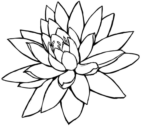 Simple Line Drawing Of Flower : Lotus flower line drawing cliparts art pinterest