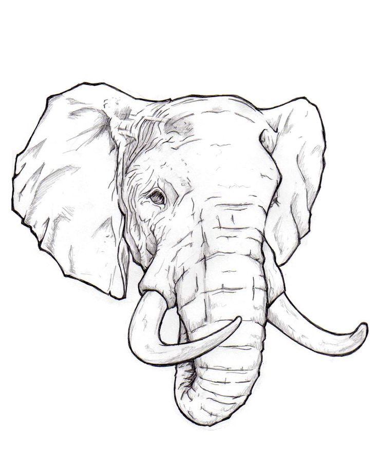 Elephant = memory, family, strength, emotion Would be beautiful to add delicate Mandela on forehead Más