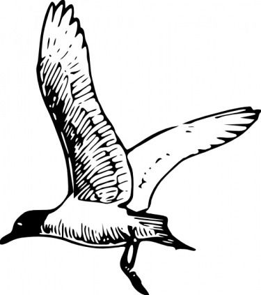 http://cdn.freebievectors.com/illustrations/7/f/franklins-gull-clip-art/preview.jpg