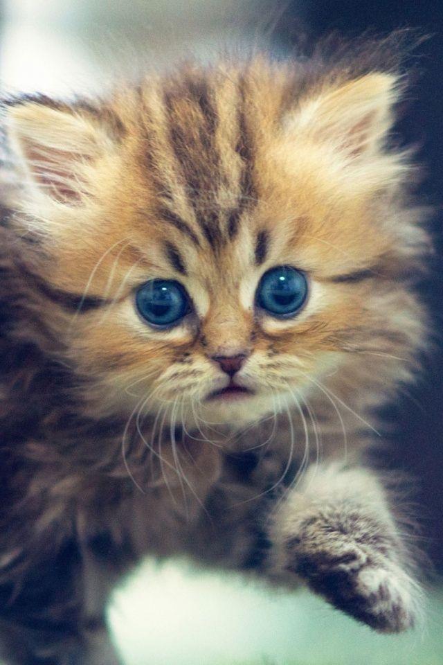 Cute Funny Kitten Mobile Wallpaper