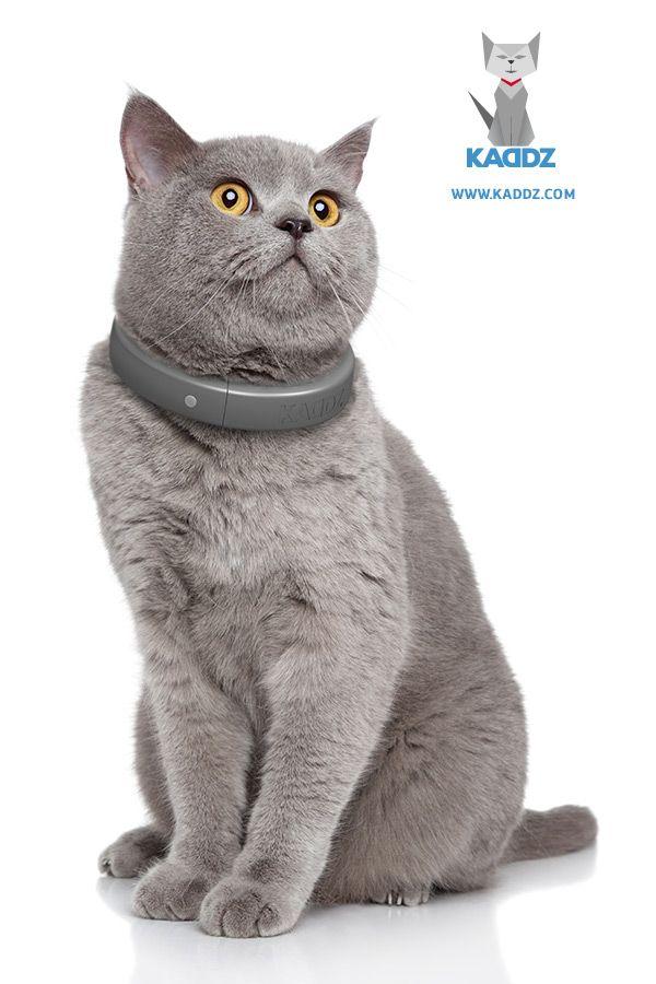 Ihre Katze ist neugierig und liebt ihre Freiheit. Sie hingegen wollen sicher sein, dass es Ihrem Liebling gut geht, oder Ihre vermisste Katze wieder finden, wenn sie für längere Zeit nicht nach Hause kommt. KADDZ, das intelligente Katzenhalsband, bringt ihre beiden unterschiedlichen Bedürfnisse zusammen. Dank KADDZ, der dazugehörigen Smartphone-App oder dem Zugang via Webbrowser wissen Sie jederzeit, wo sich ihr Tier aufhält und ob es wohlauf ist.