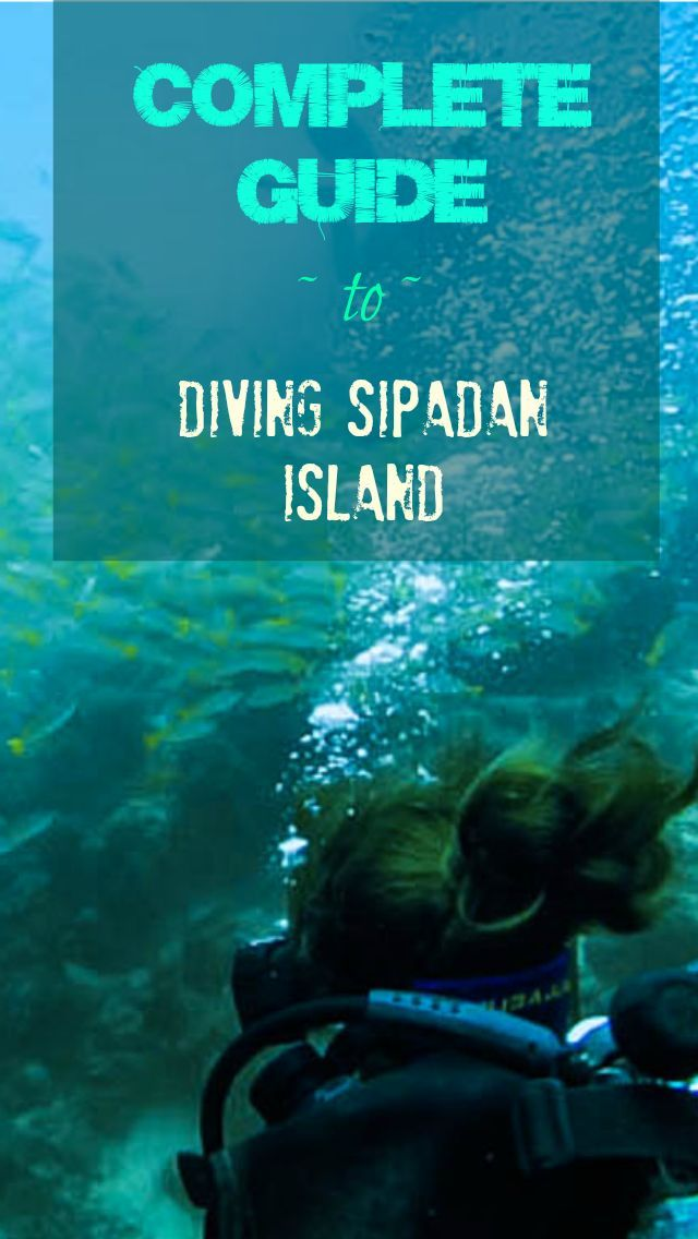 Complete Guide to Diving Sipadan Island. There's only a few places on earth were you can see huge schools of whirling barracudas that engulf you, large sea turtles of different species, lurking sharks, and jammed-packed reef of angelfish, triggerfish, morays and gobies all in just one dive. Sipadan Island is a marine paradise for divers tucked in the Celebes Sea, 35km south of Semporna off the coast of Sabah, Borneo Malaysia…