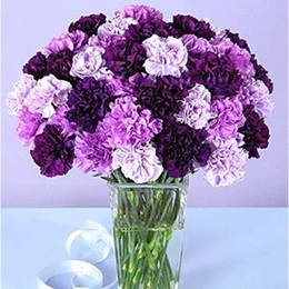 These Moon Series carnations come in four shades of purple #carnations #purple #flowerarrangement