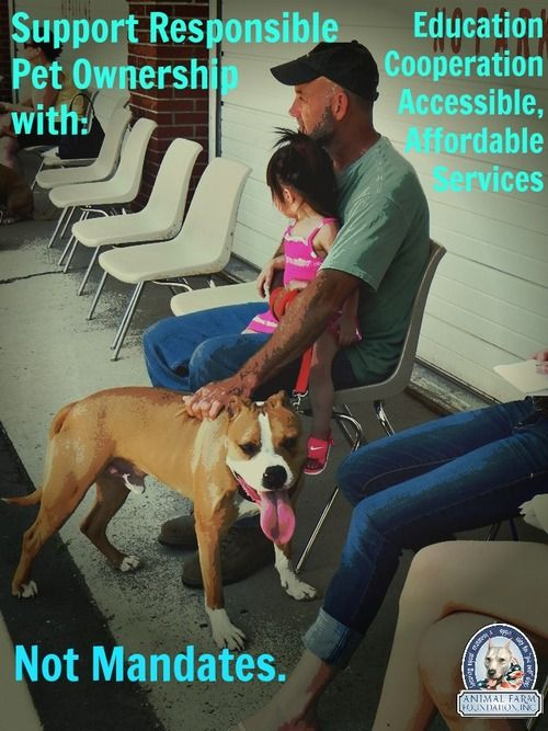 the right to own pit bulls Home / how to raise a balanced pit bull how to raise a balanced pit bull  you are welcome to share your own dog tips and behavior solutions among yourselves.
