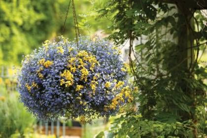 Plantes retombantes à fleurs et vivaces - 10 idées pour un extérieur fleuri accrocheur