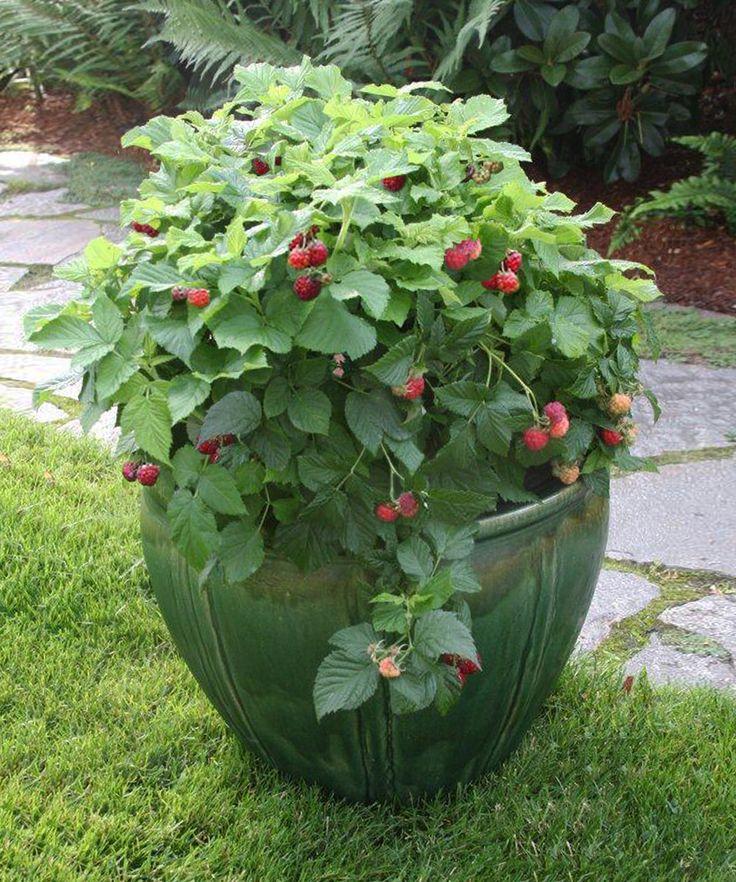 New Gardening Ideas 48 best new plants for my new garden images on pinterest | garden