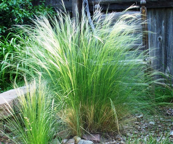 17 best images about modern mountain landscaping on for Modern grasses landscaping