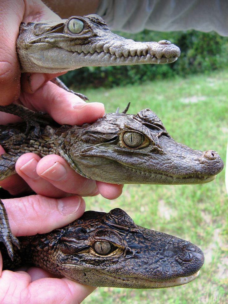 Image result for crocodile habitat