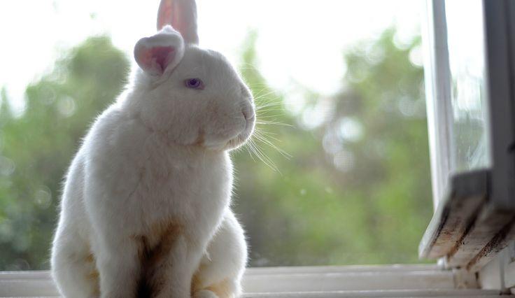 Flufi on the windowsill