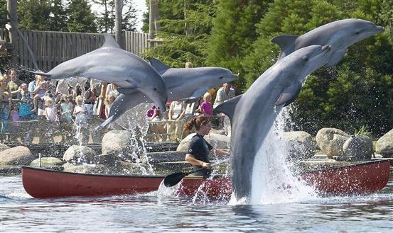 Een indrukwekkende collectie zeezoogdieren in het Dolfinarium. Meer informatie: http://www.dolfinarium.nl/