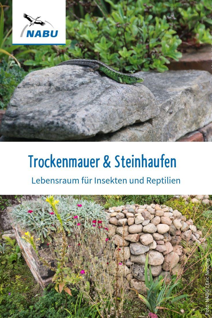 Steinhaufen Oder Trockenmauer Anlegen Nabu Trockenmauer Steinhaufen Garten Und Outdoor