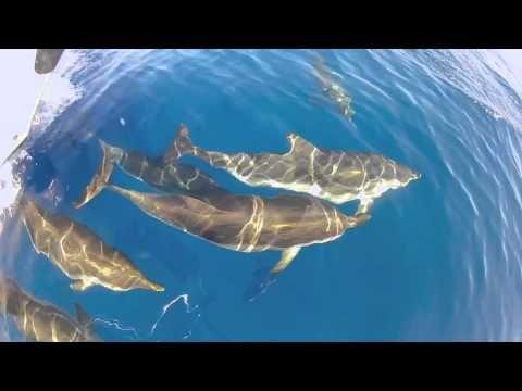 Nage avec les dauphins en méditerranée, en France. Déroulement d'une journée type à partir du bateau Cala Rossa