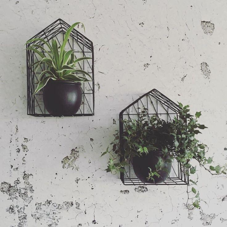 1000 idee n over badkamer planten op pinterest kamerplanten binnenplanten en kamerplant - Deco hangende toilet ...
