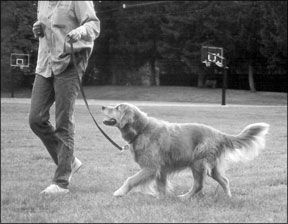Dog Training Equipment - Whole Dog Journal Article