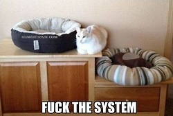 Fuck the System! This is every cat I have ever owned.Cat Beds, Orange Cat, Funny Pictures, Cat Logic, Funny Cat, Pets, Kitty, Cat Lady, Animal