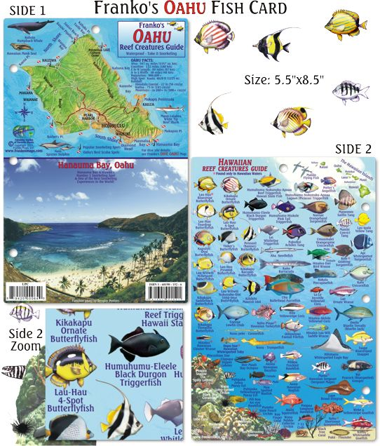 1000 images about hawaii fish cards on pinterest for Hawaii fish guide