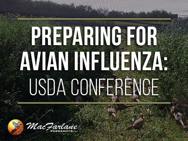 Read more about how we've been preparing for Avian Influenza.