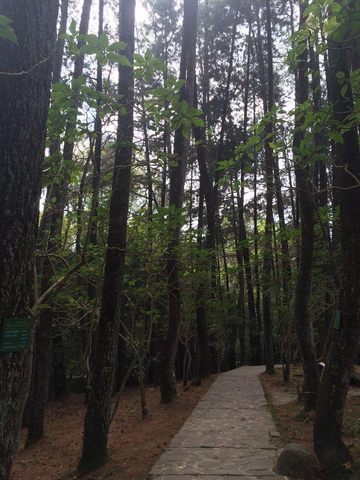 Forest Park Dago