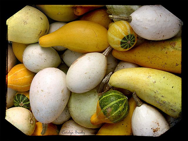 pumpkins and gourds | Flickr - Photo Sharing!