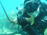 "Got bugs? Dive Duck Key provides special Florida Keys lobster season dives (August 6-March 31) for your chance to catch delicious Florida spiny lobster, also referred to as ""bugs."""