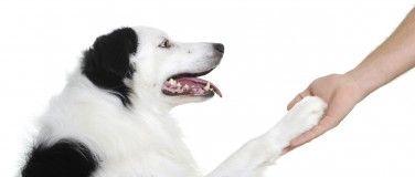 trening av hund
