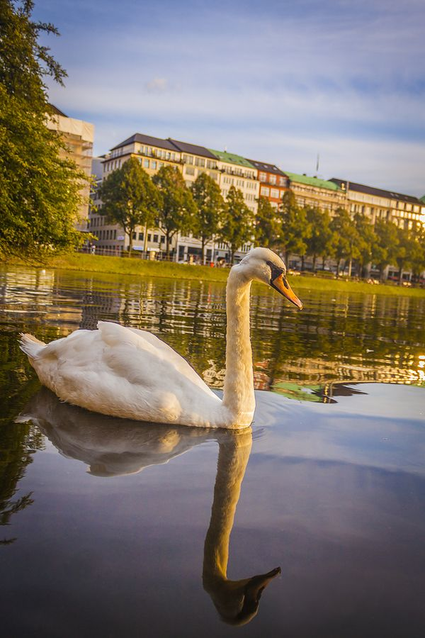 Alster River, Hamburg, Germany