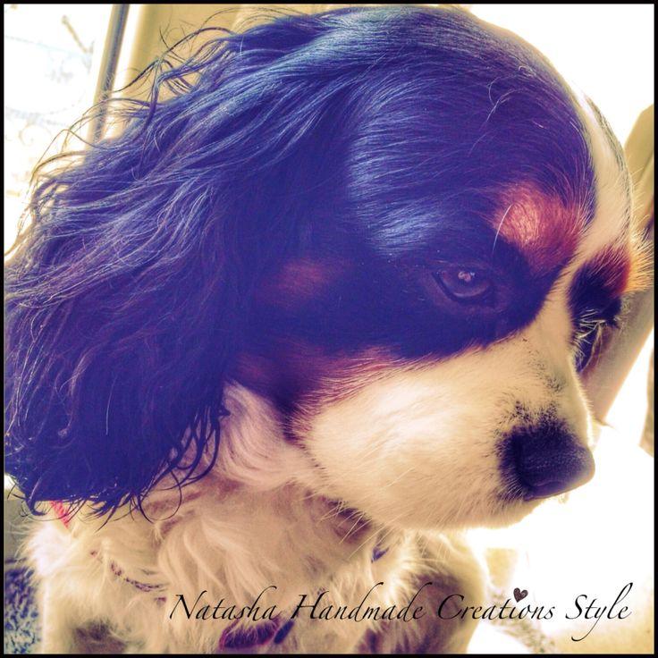 Oliver il mio cucciolo peloso