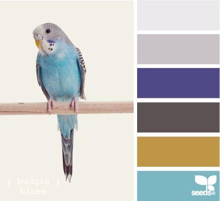 budgie blues: Colors Pallets, Colors Combos, Decor Design, Design Seeds, Colors Palettes, Colors Schemes, Budgies Blue, Colour Chips, Houses Design
