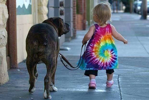 Vai dritto per la tua strada che a far da leone serve solo coraggio e amore...Poco importa delle tue vesti, se hai il passo retto e tutto comprendi ! BUONGIORNO !