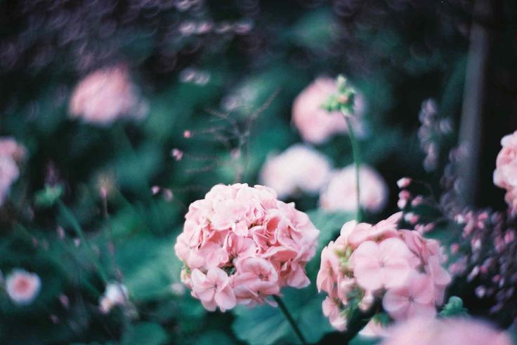 Awesome Albums: Petzval Flower Portraits by antiox · Lomography