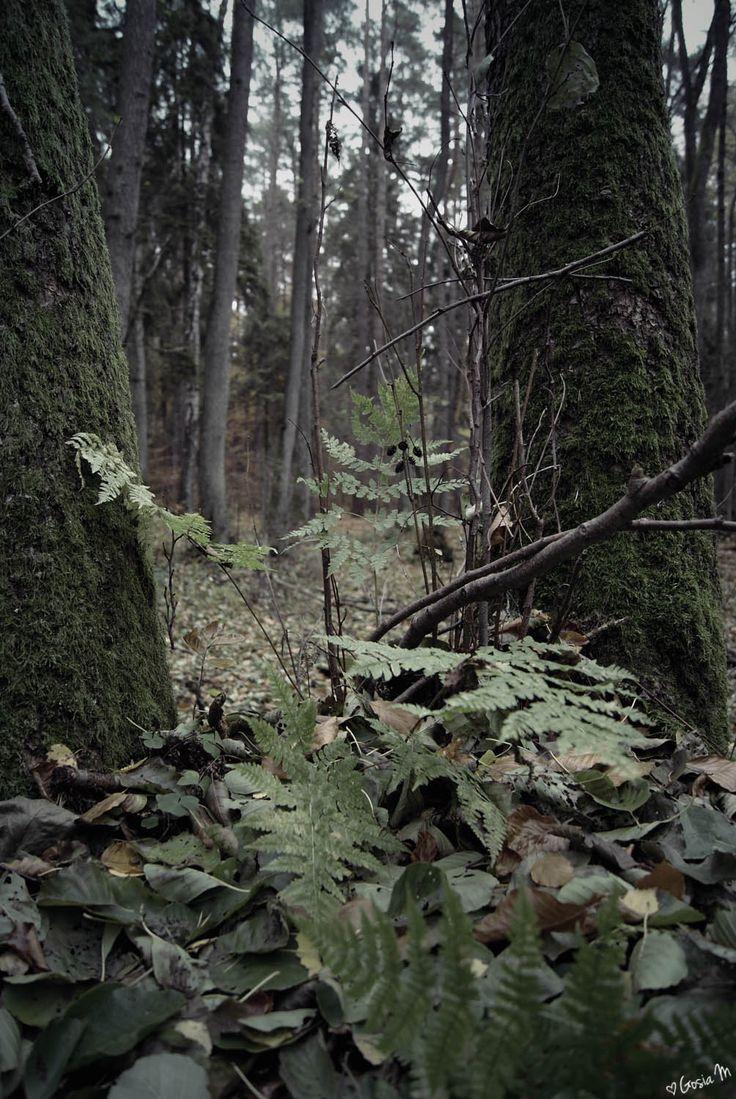 by ♡Gosia M more: http://xgosia-mx.tumblr.com   &   https://www.facebook.com/gosiamphoto  #wood #forest #gosiam #dark