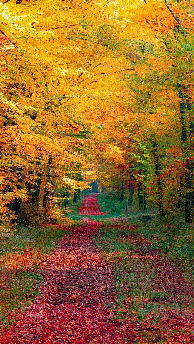 Maple Leaf Pathway, Beautiful