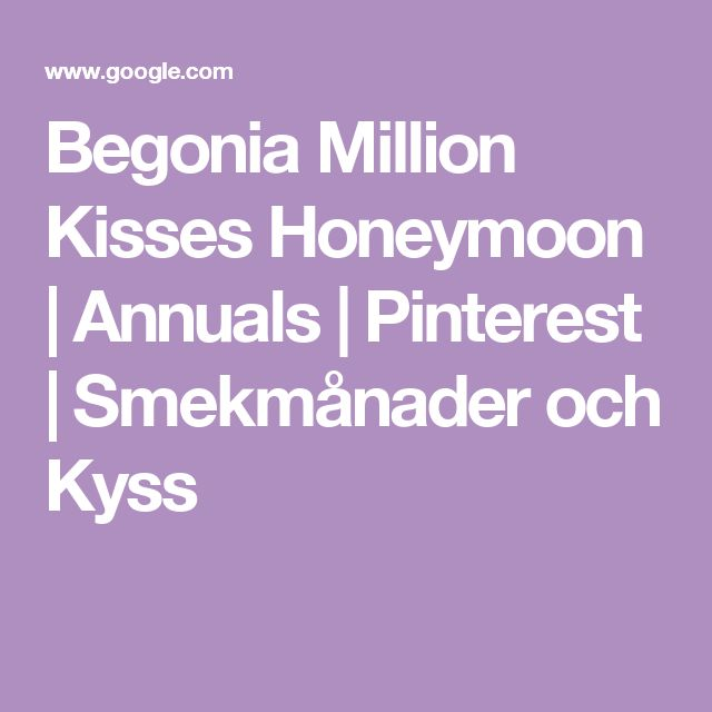 Begonia Million Kisses Honeymoon | Annuals | Pinterest | Smekmånader och Kyss