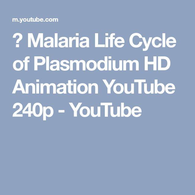 ▶ Malaria Life Cycle of Plasmodium HD Animation YouTube 240p - YouTube