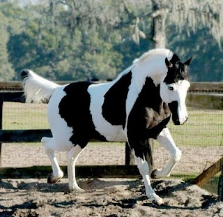 perfect ♥Beautiful Hors, Colors, Wars Painting, Black White, Hors Pictures, Painting Horses, Wild Mustangs, Animal, Hors Breeds