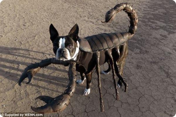 Хвост собаки для костюма