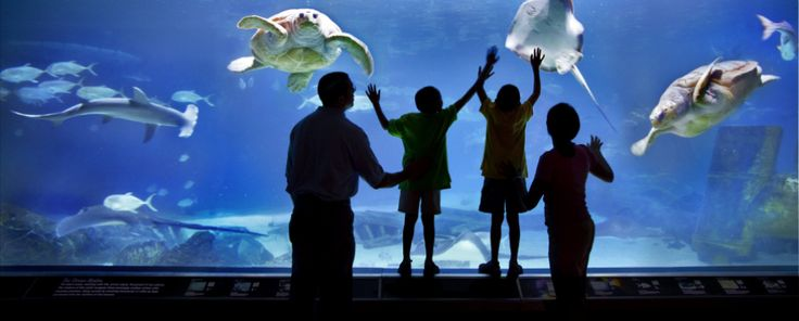 Adventure Aquarium, located on the Camden Waterfront in New Jersey  Went there with Riley.