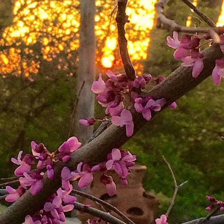"""Spring in Kansas no filter needed! Another wonderful benefit of social media beautiful photos from all around the world right at your fingertips...this one from just """"next door"""" taken by my stepmom just outside HER front door. #T2DSocial"""