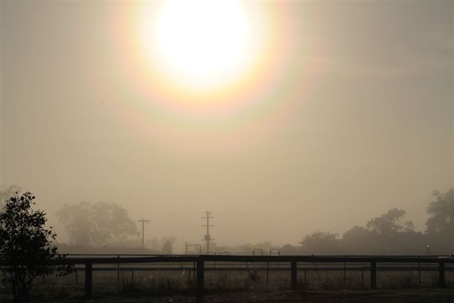 Local Vineyard in the early morning, Manjimup, Western Australia...Taken by Daphne Greenhow