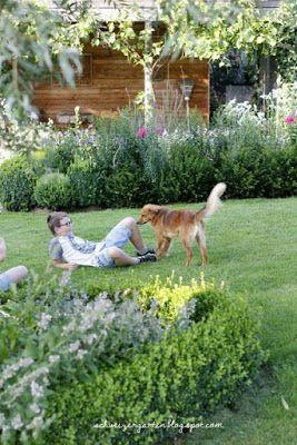 Tierschutz, adoptieren statt kaufen, Hund, Ungarn, Fellnasen-hilfe.ch, Mischling, Golden Retriever Mix,
