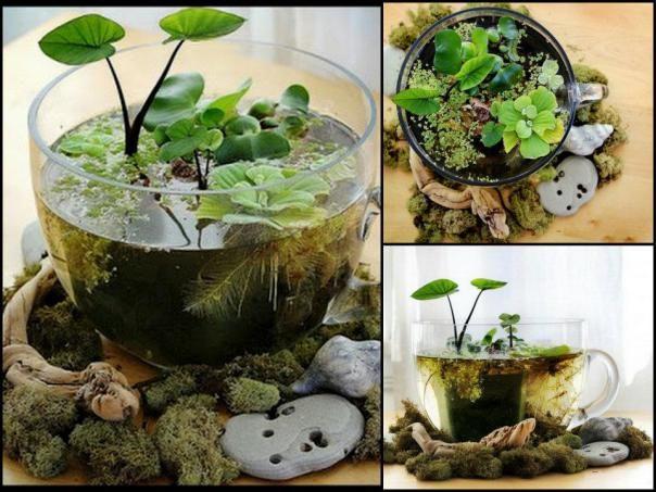 Caneca de vidro grande pode se tornar um lindo terrário para plantas aquáticas, que tal ?