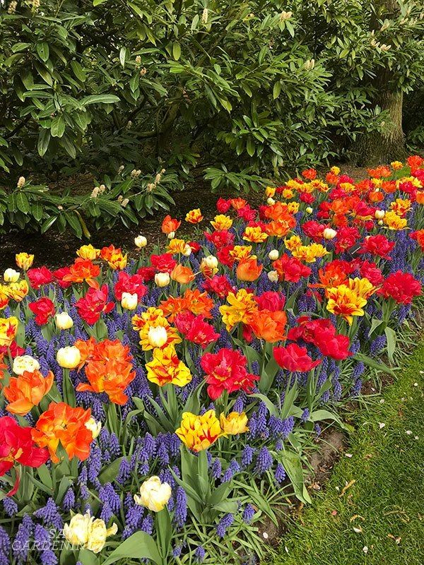 Bulb Planting Design Tips And Inspiration From The Keukenhof