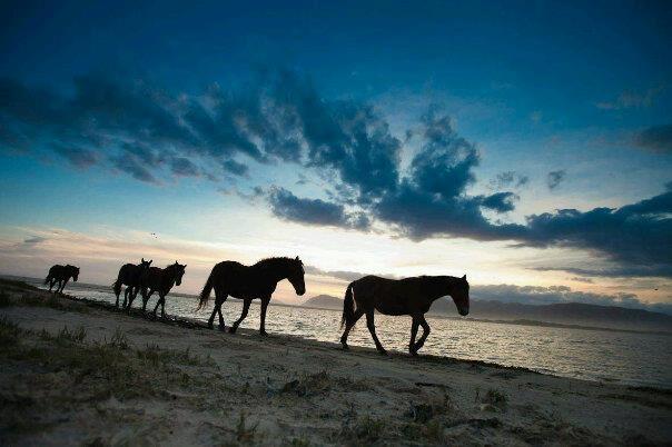 Wild Horses Kleinmond South Africa