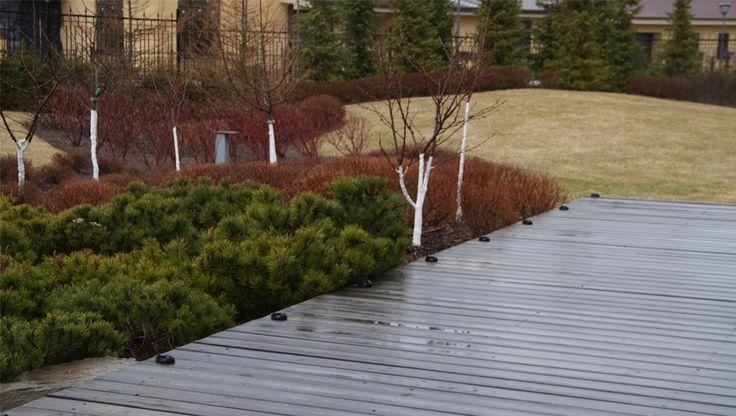 Pine wood deck. Дек из импрегированной сосны. Ландшафтные работы  и ландшафтный дизайн - СпецПаркДизайн, Saint-Petersburg, Russia