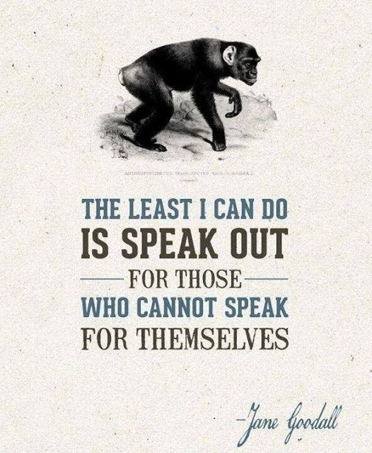 The least I can do is speak out for those who cannot speak for themselves | Anonymous ART of Revolution