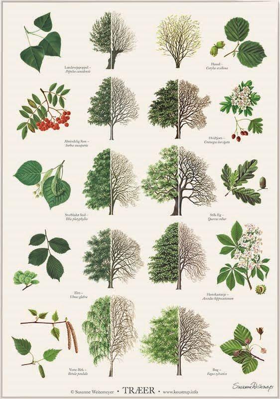 листья деревьев какие бывают с картинками этот период