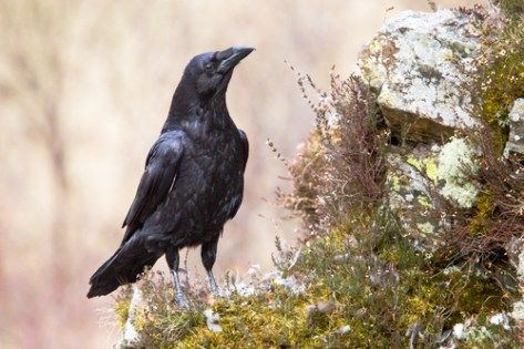Precocial or Altricial Birds - What Is The Difference?
